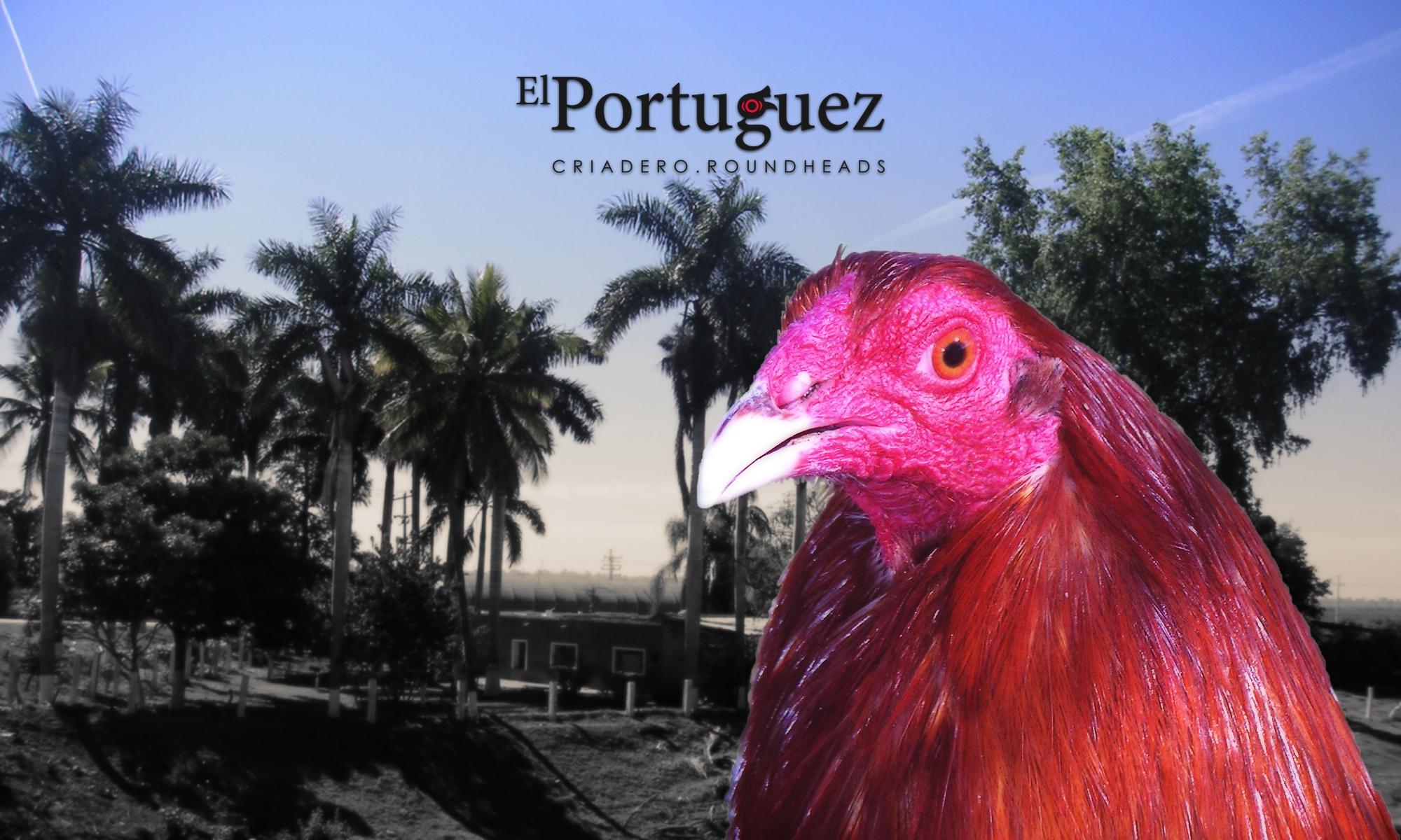 El Portuguez